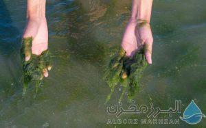 رشد جلبک در مخزن آب