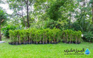 گلدانهای پلاستیکی برای نهال درختان